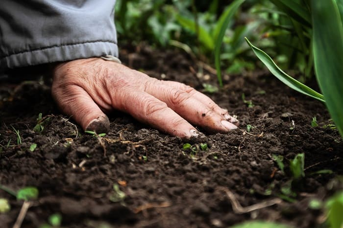 Best Time To Fertilize Lawn Before Or After Rain Gardening Dream