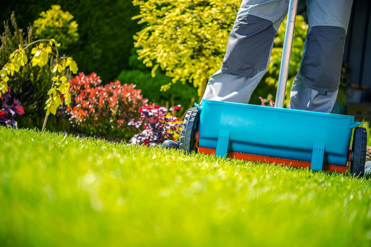 The Best Weed And Feed For Spring Lawn