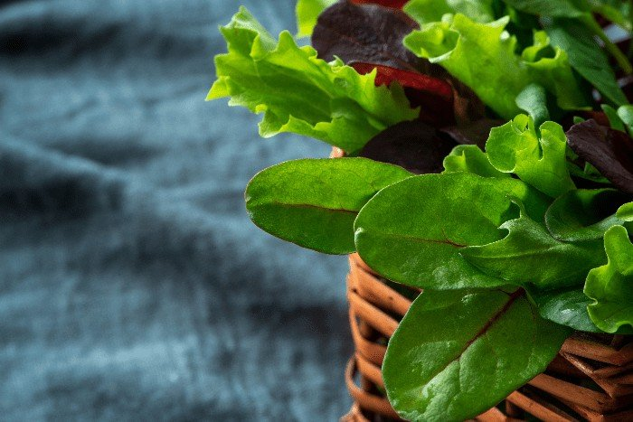 What is the Right Way to Cut Lettuce from the Garden