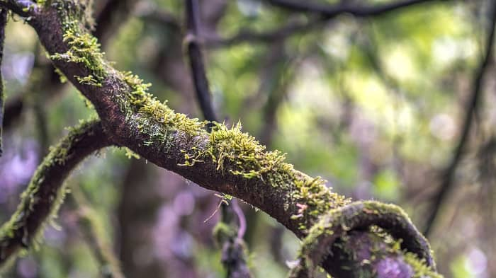 How to Get Rid of Lichen on Trees