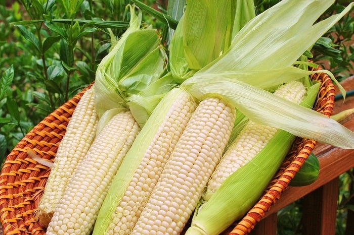 How to Tell When Corn is Ready for Picking