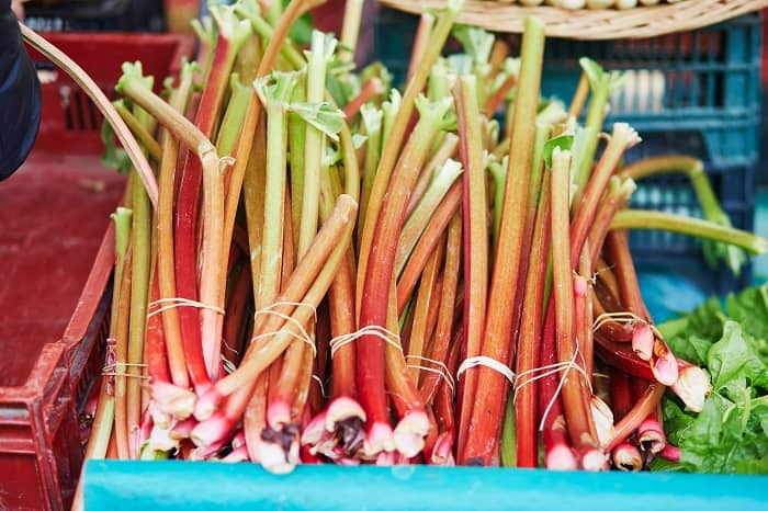 When Is Rhubarb Ready to Pick?