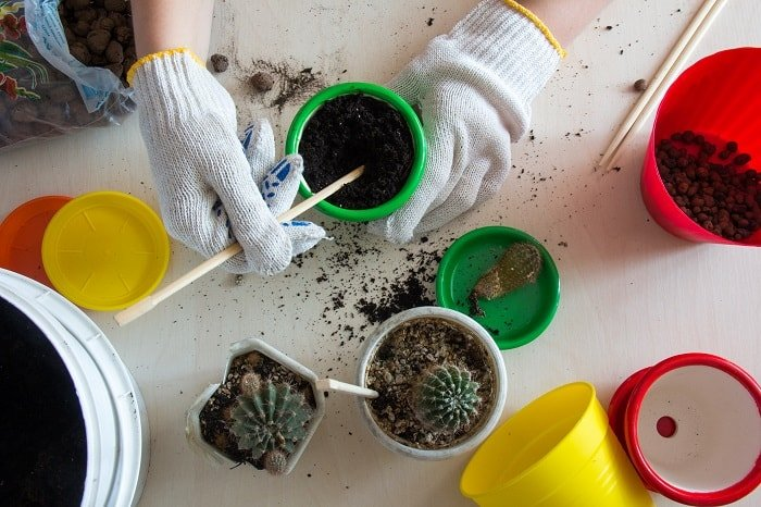 The Best Fertilizer for Cactus and Succulents